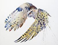 Eagle owl movements