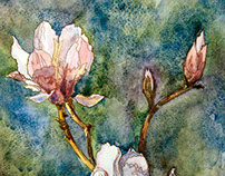 Watercolor. Magnolia.