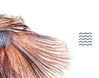 BARBATANA Atlantic Fish Bar
