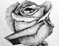 Sketch | Rose