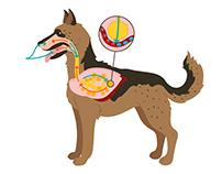 Animal Respiration illustrations