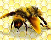 Dancing Honey Bee