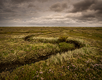 North Norfolk Salt Marshes