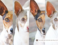 Humane Society of Southern Arizona Calendar