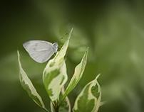 Nature Is Art.  Nature Macro Photography