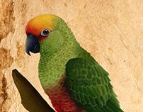 jandaia-de-testa-vermelha (Aratinga auricapillus)