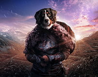 Bernese Mountain warrior project