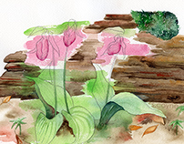 Botanical Notebook no. 2