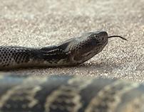 Snake Model