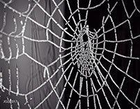 The Web of Life and Death Frozen in Time