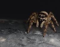 Spiders - Pajki
