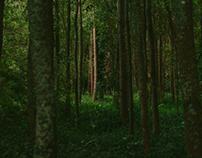 Serra da Boa Viagem - Natureza