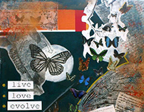 Live Love Evolve