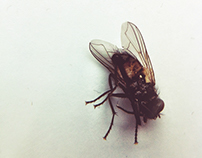 iPhone Macro Photography