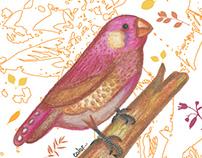 Natural - Ilustraciones