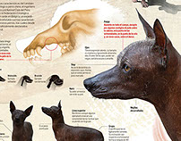 Peruvian Hairless Dog Day