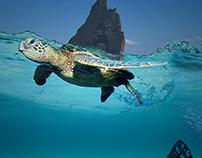 voyages d'une ile tortue