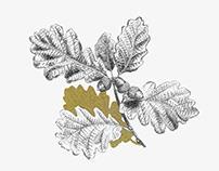 Aitona, Amona | Illustration