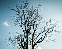 treetops/no.2