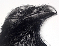 'Crow Series' prints - charcoal drawings