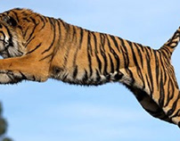 That Is Tiger Jump