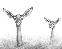 Waller' gazelle - Gerenuk