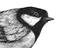 Project - Scientific Illustration -- 5 illustrations --