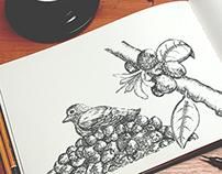 Ilustration/ Pajaro Cafetero