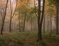Autumn in Wendover Woods