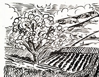 Vineyards - Ink Drawing