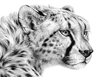 CHEETAH - graphite drawing
