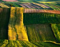 Green power. Spring. Roztocze. Poland