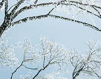 Winter·SiChuan