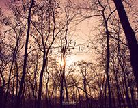 Tree photos 1