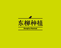 Dongliu Planted 东柳种植