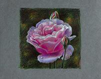 Портрет розы.