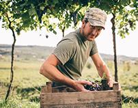 Agricola Cottini | Harvest Reportage