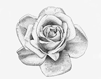 Stippling - Rose