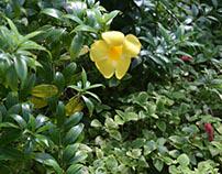 Sunken Gardens in St. Petersburg, Florida