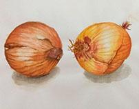 Onion watercolor