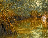 Mangrove Swamp in the Florida Borogoves