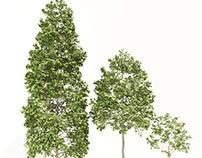 TreeG