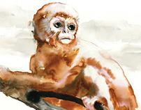 Chinese Monkey Illustration