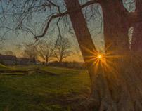 Dawn Through a Tree