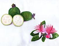 Ilustraciones Serie Plantas y Frutos silvestres