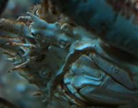 BMPCC Serie – Aquarium Berlin