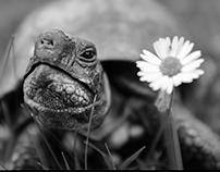 Tim Tortoise