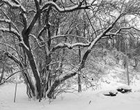 Winter Trees in Brooklyn, NY