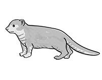 Mongoose or Helogale Parvula Endangered Wildlife Cartoo