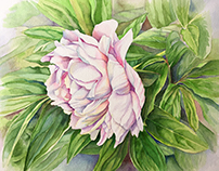 Peony Revisited